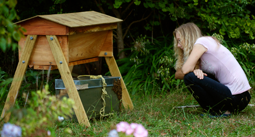 Deb inspects our new beehive